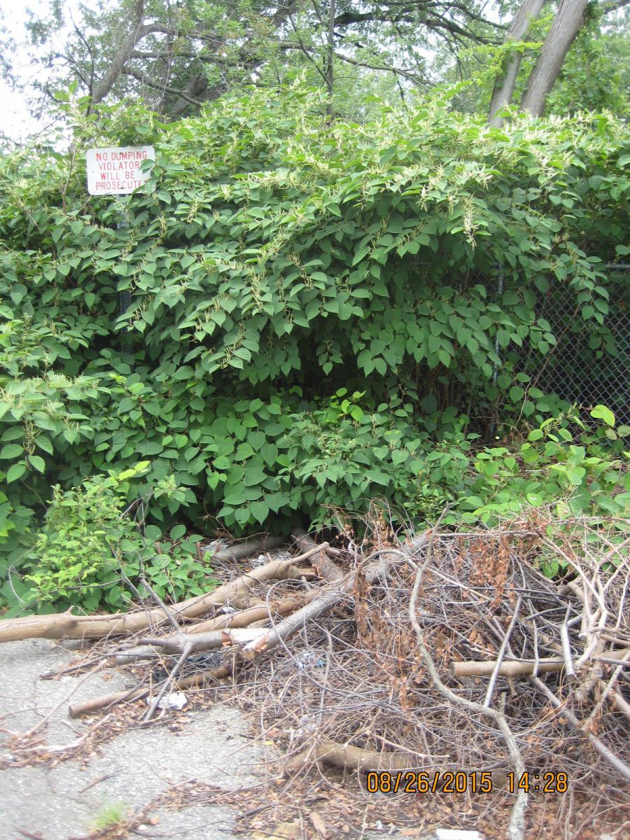 No Dumping ignored- riverbank kzoo.JPG