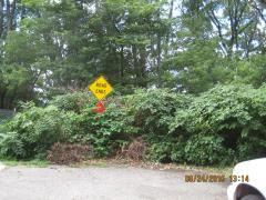 illegal dumping resprouted Lowden kzoo.JPG